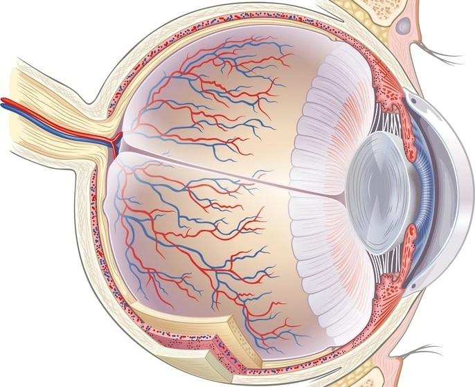 Причиной ухудшения зрения может стать недостающее кровообращение
