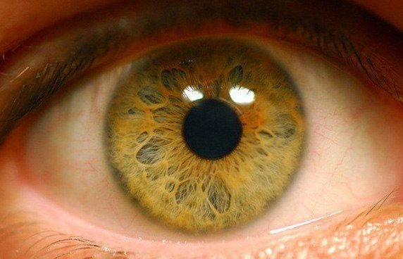 какой орган отвечает за аллергию в организме