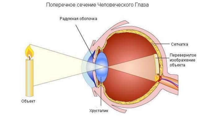 Оптическая система человека