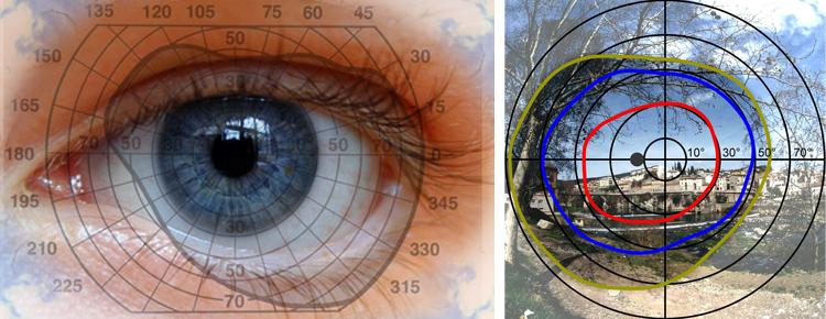 Угол обзора периферического зрения