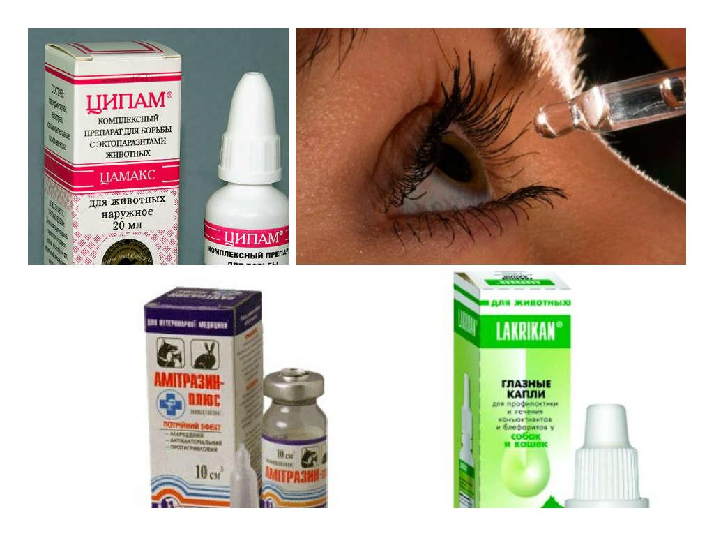 Лечение глазного клеща