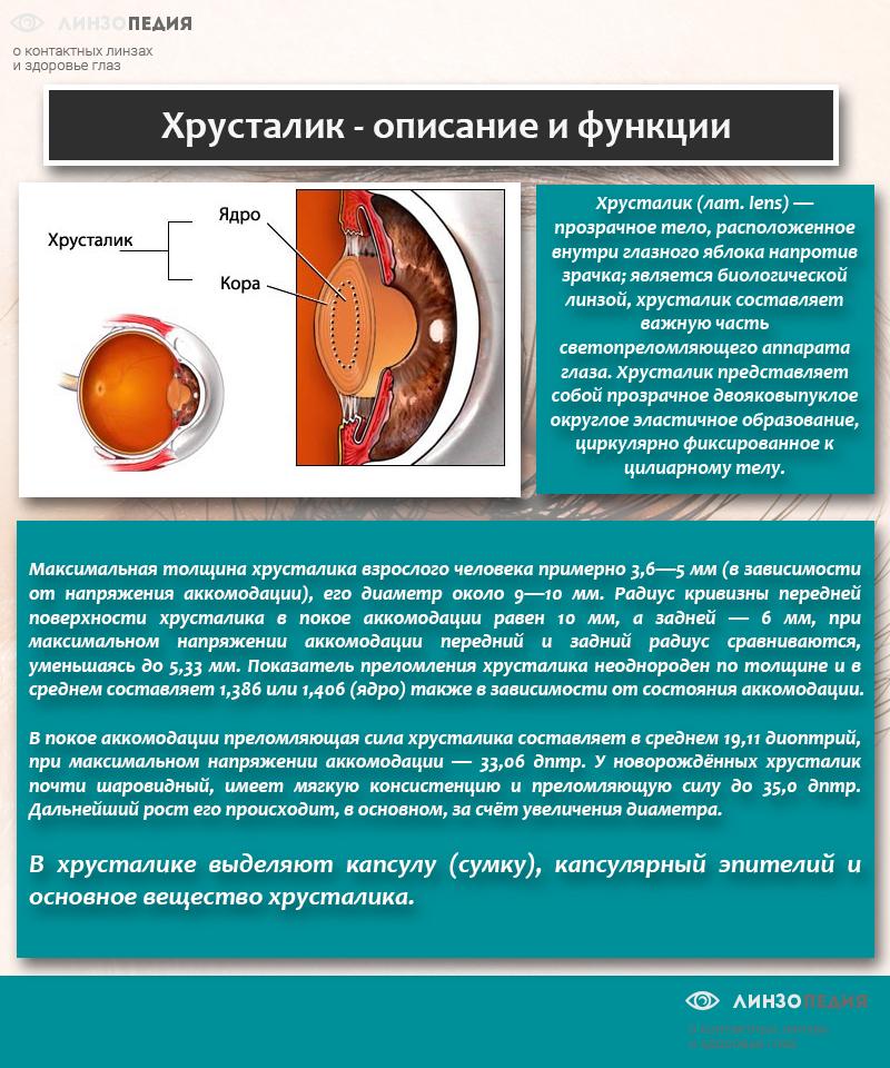 Хрусталик - описание и функции