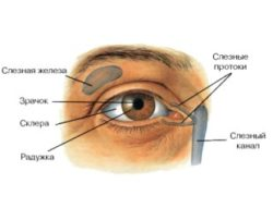 Ослабление мышц слезных канальцев