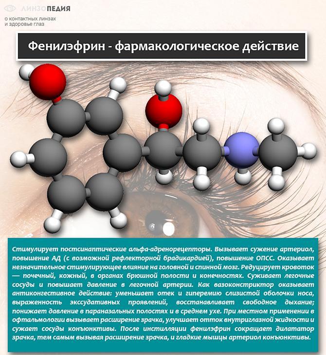 Фенилэфрин фармакологическое действие