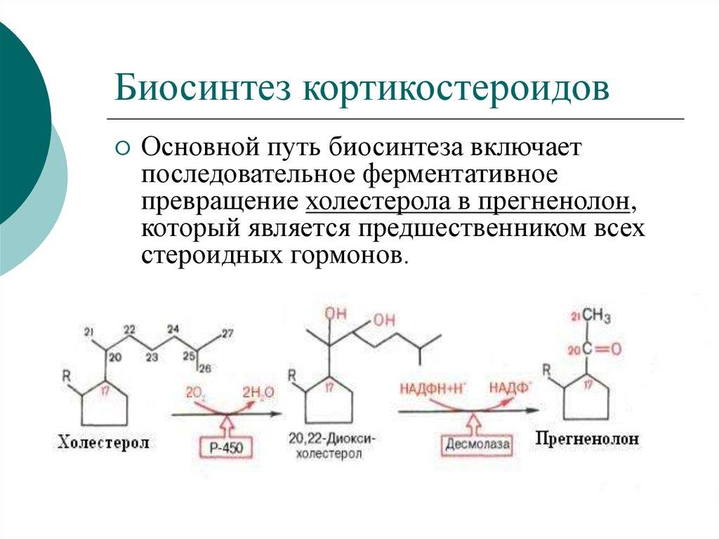 Биосинтез кортикостероидов
