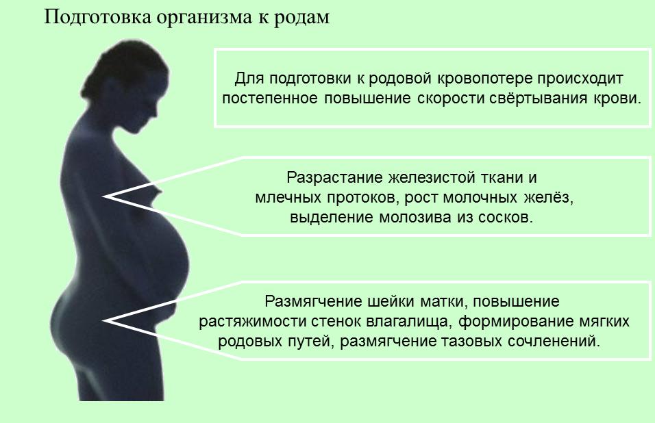 Главные отличия схваток перед родами от начавшейся родовой деятельности