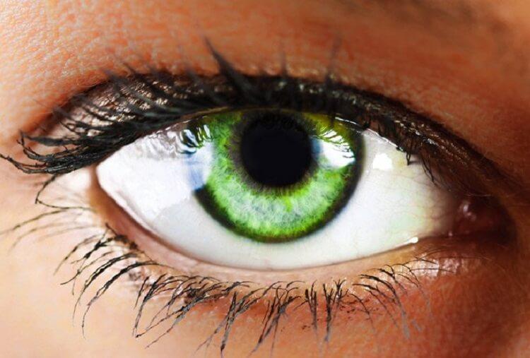 Люди с зелёными глазами мнительны и ранимы