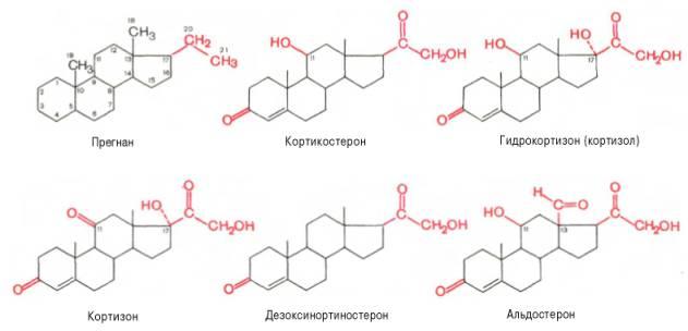 Прегнан, кортикостерон, гидрокортизон (кортизол), кортизон, дизоксинортиностерон, альдостерон