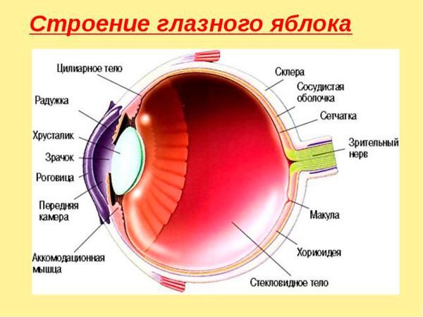 боль в глазных яблоках и голове