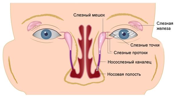 Строение носослёзного канала