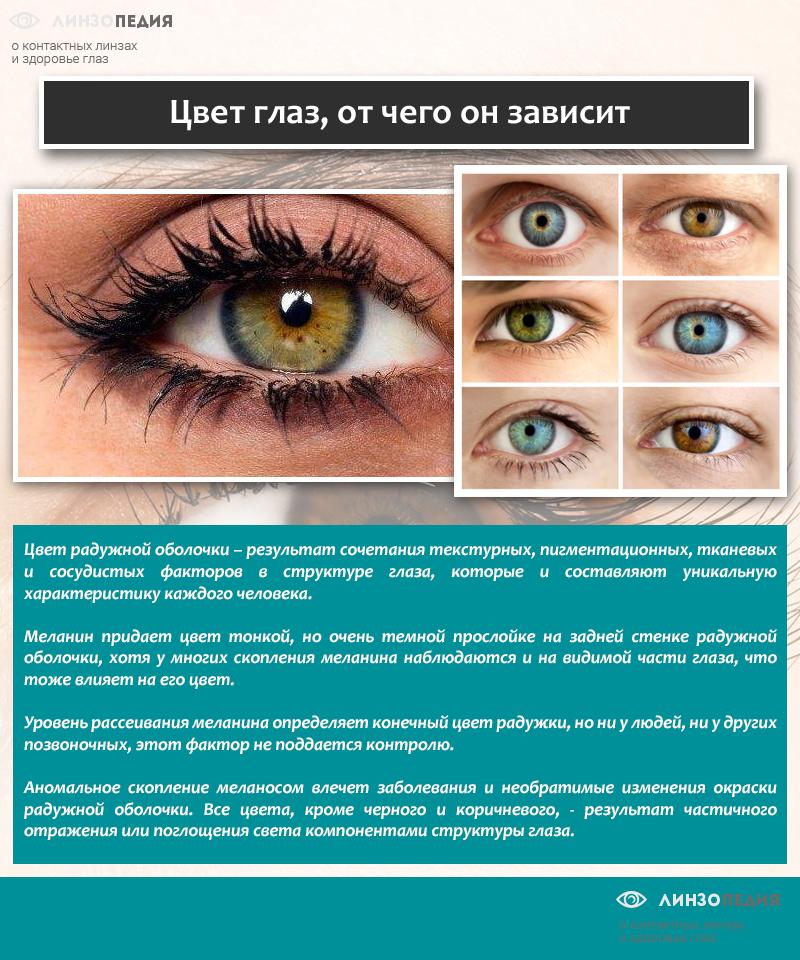 Цвет глаз, от чего он зависит