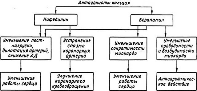 Диаграмма действия антагонистов кальция