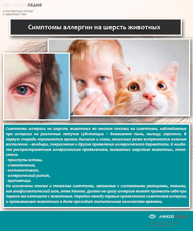 Симптомы аллергии на шерсть животных
