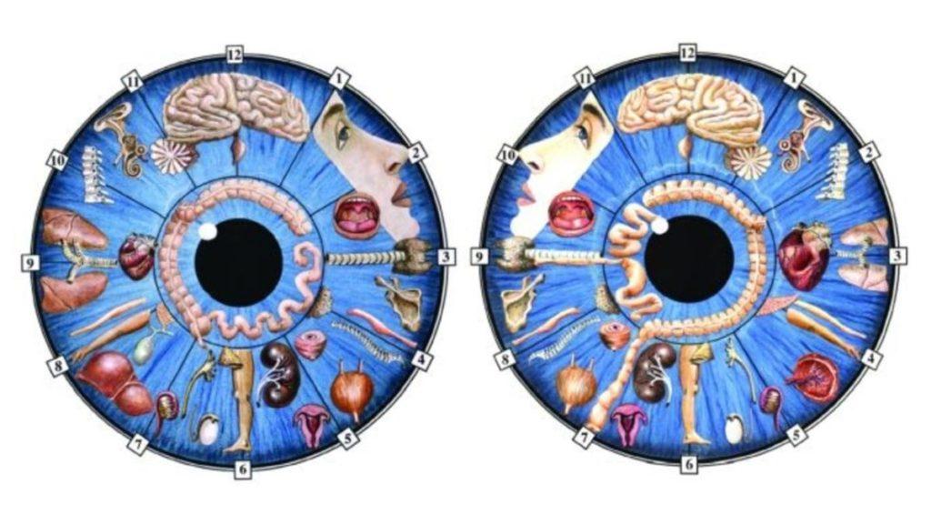 Иридодиагностика — диагностика заболеваний по видоизменению формы, структуры, цвета и подвижности радужной оболочки глаза (от греческого «iris» — «радужка»)