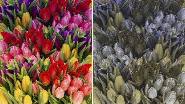 Цветовое восприятие дейтеранопа