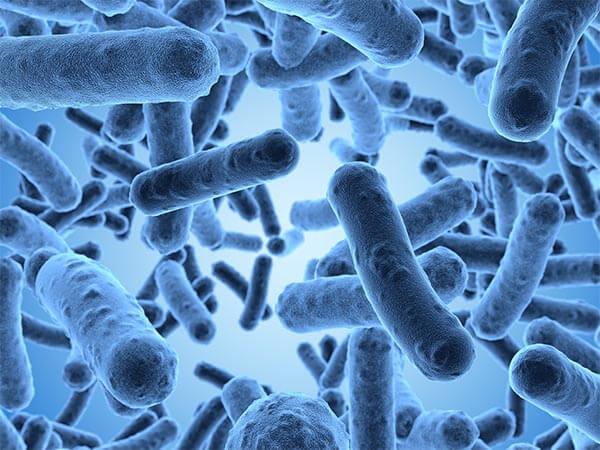 Бактерии рода Enterobacter