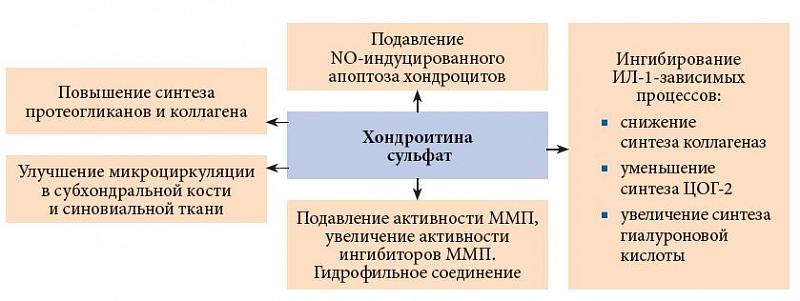 Как действует хондроитина сульфат