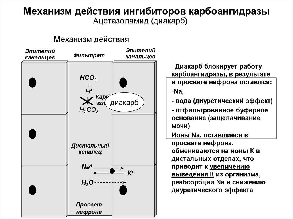 Механизм действия ингибиторов карбоангидразы
