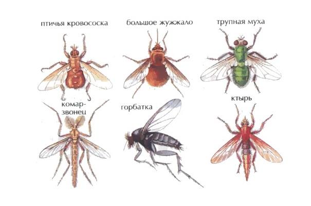 Некоторые кровососущие насекомые
