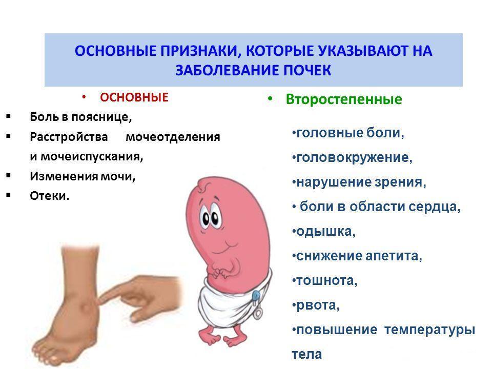 Основные признаки, которые указывают на заболевание почек