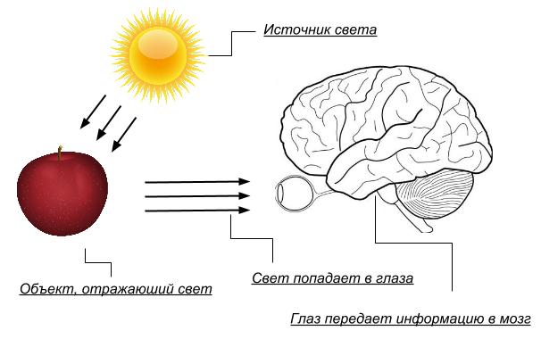 Физика восприятия