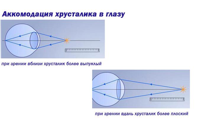 Аккомодация хрусталика в глазу